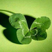 トイレインテリア 四つ葉のクローバー