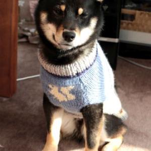 うれしい頂き物☆ワンコ用セーター2