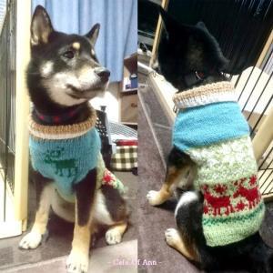 うれしい頂き物☆ワンコ用セーター1