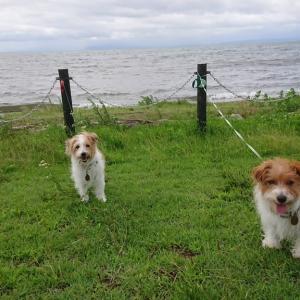 琵琶湖畔をお散歩🐾