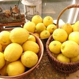 最終檸檬収穫
