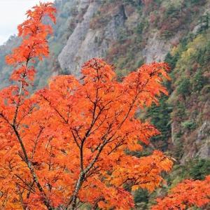 四国の屋根「瓶ケ森」周辺の秋色・高知の秋・旅の思い出「北米大陸の秋」