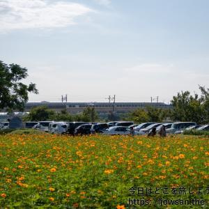 尼崎市の武庫川髭の渡しコスモス園へ「コスモスと新幹線」散策ぶらり旅