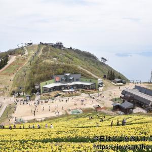 びわ湖バレイへ関西最大級の黄色いスイセンの丘を見に散策ぶらり旅