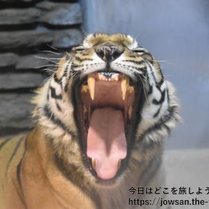 サンダーバードに乗って石川県「いしかわ動物園」へ散策ぶらり旅