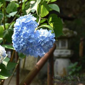 京都の丹波あじさい寺「あじさい参詣」へ散策ぶらり旅