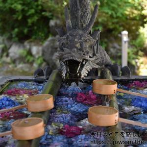 京都・長岡京市の柳谷観音・楊谷寺へあじさいを見に散策ぶらり旅