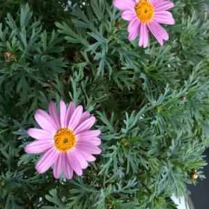 冬のお花たち&娘