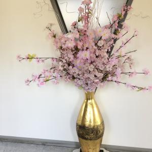 桜、、、また来年ね!