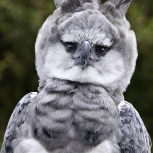 【画像】中ボスっぽい鳥が見つかる