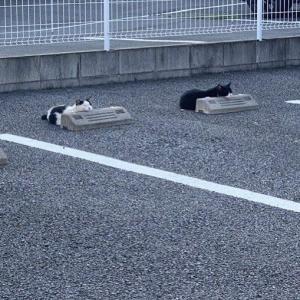 【画像】猫、暑すぎてこうなるww