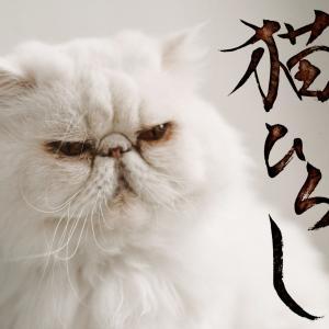 猫派か犬派か ~8月の大津稽古スタート