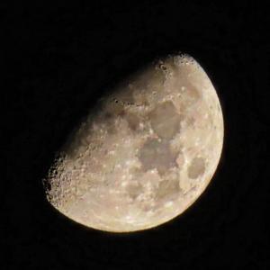 お月様もキレイだわ