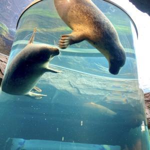 旭山動物園と小樽の夜
