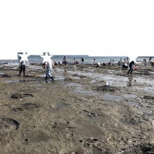 2019年の潮干狩りに行ってその後の作業でイライラ。