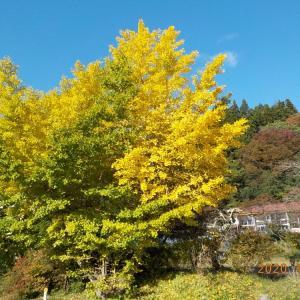 紅葉の季節、故郷も色付いてきました