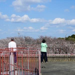 豊川御津山と、ウラシマソウを見に行ってみた