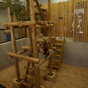 のんほいパークのレッサーパンダ