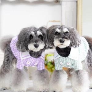 愛犬を守るための行政の新型コロナウィルス感染症(COVID-19)まとめ