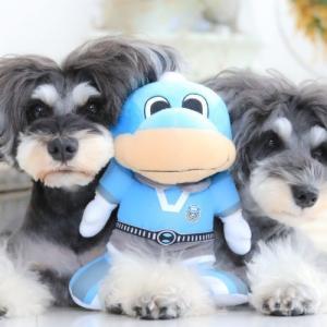 3月24日(日)は川崎でお待ちしております🎶川崎フロンターレ×愛犬って!?