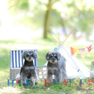 髭犬祭2019に事前のお申し込みは今日までとなります。そして、新しい名刺を作りましたのでみなさまぜひお名刺交換もよろしくお願い致します✨個人的に特典(?)も用意中!