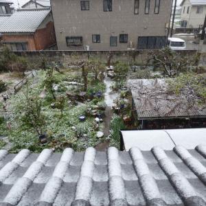 まさかの雪ですか。