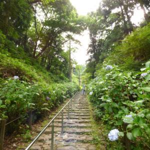 【あじさいの坂だからあじさい坂】太平山の坂道はなかなかのものでした。