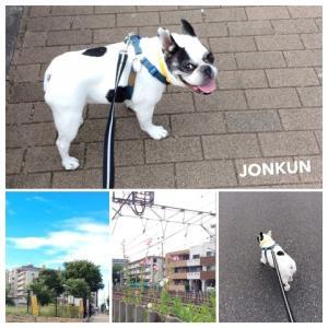 お散歩ジョン君