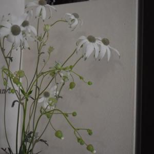 この花、なんだっけ