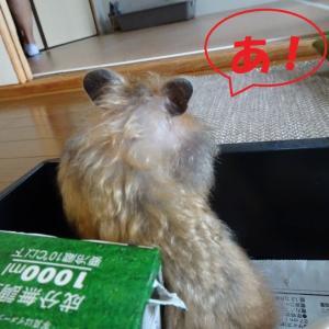 はまるネズミ