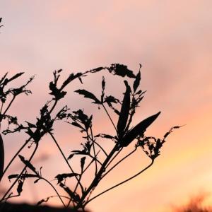 庭から夕焼けを・・・