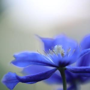 梅雨にはブルーが似合う?