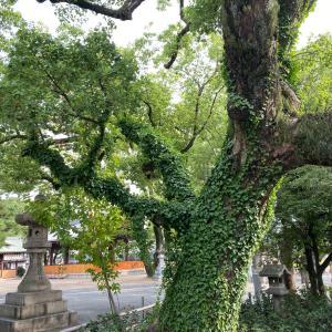 今日の気になる木