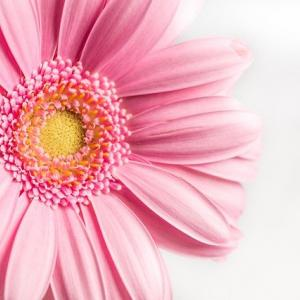 同じ花だけどカリキュラム進行すると作り方も変わります。