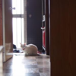 猫の体で暖をとる