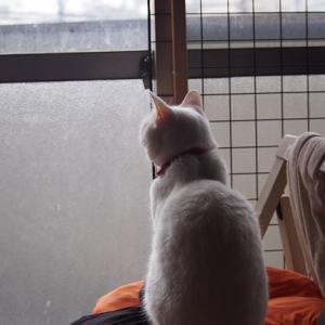 空と猫と私と