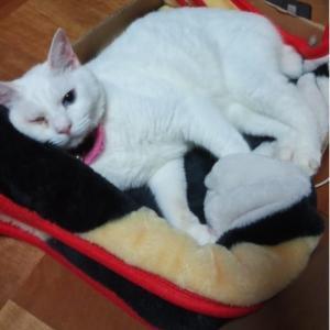 悲しき白猫