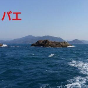 四国、宇和島沖の磯にて・・・(グレ編)