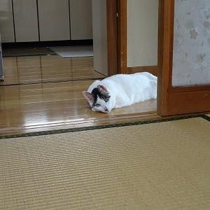 暑いから。。。