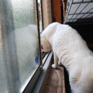 窓から警備?