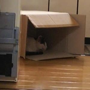 箱の中で。。。