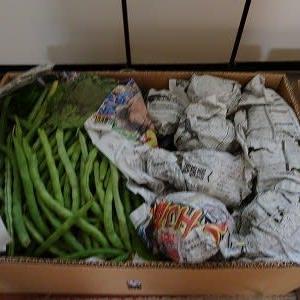 沢山の野菜が♪