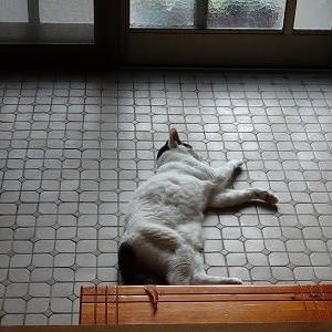 朝から玄関で。。。