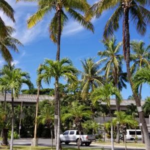 ハワイでのホゲとか色々!