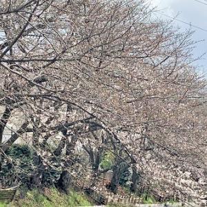 桜 と おうちごはん
