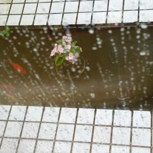 今日は雨なので。