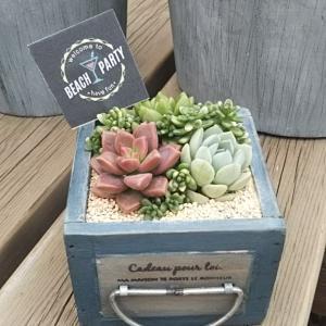 ☆小さな木箱に植える多肉のワークショップ☆