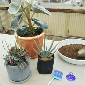 植物の植え替えを承ります