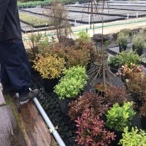 小立ガーデンさんの植物が入荷しました!