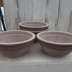 陶器鉢、ハオルチア入荷しました‼️